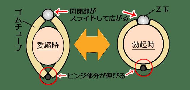クマッキーZの形状変化、サイズ変化のイメージ図